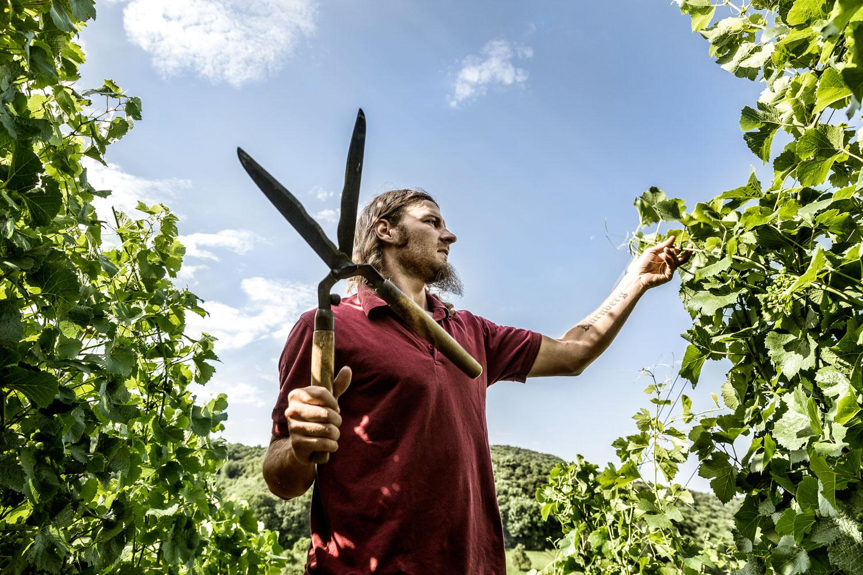Die Weinmacher, das Buch zum Weinland Franken. Markus Hillabrand beim Wipfeln