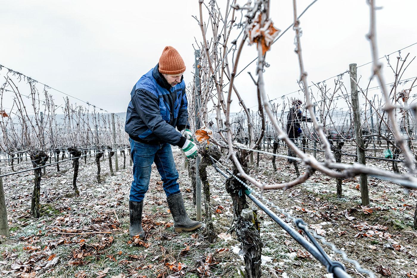Die_Weinmacher_Franken_Das_Weinjahr_Winter_Rebschnitt