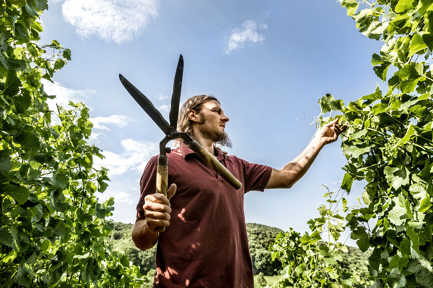 Die_Weinmacher_Franken_Das_Weinjahr_Sommer_Laubarbeiten