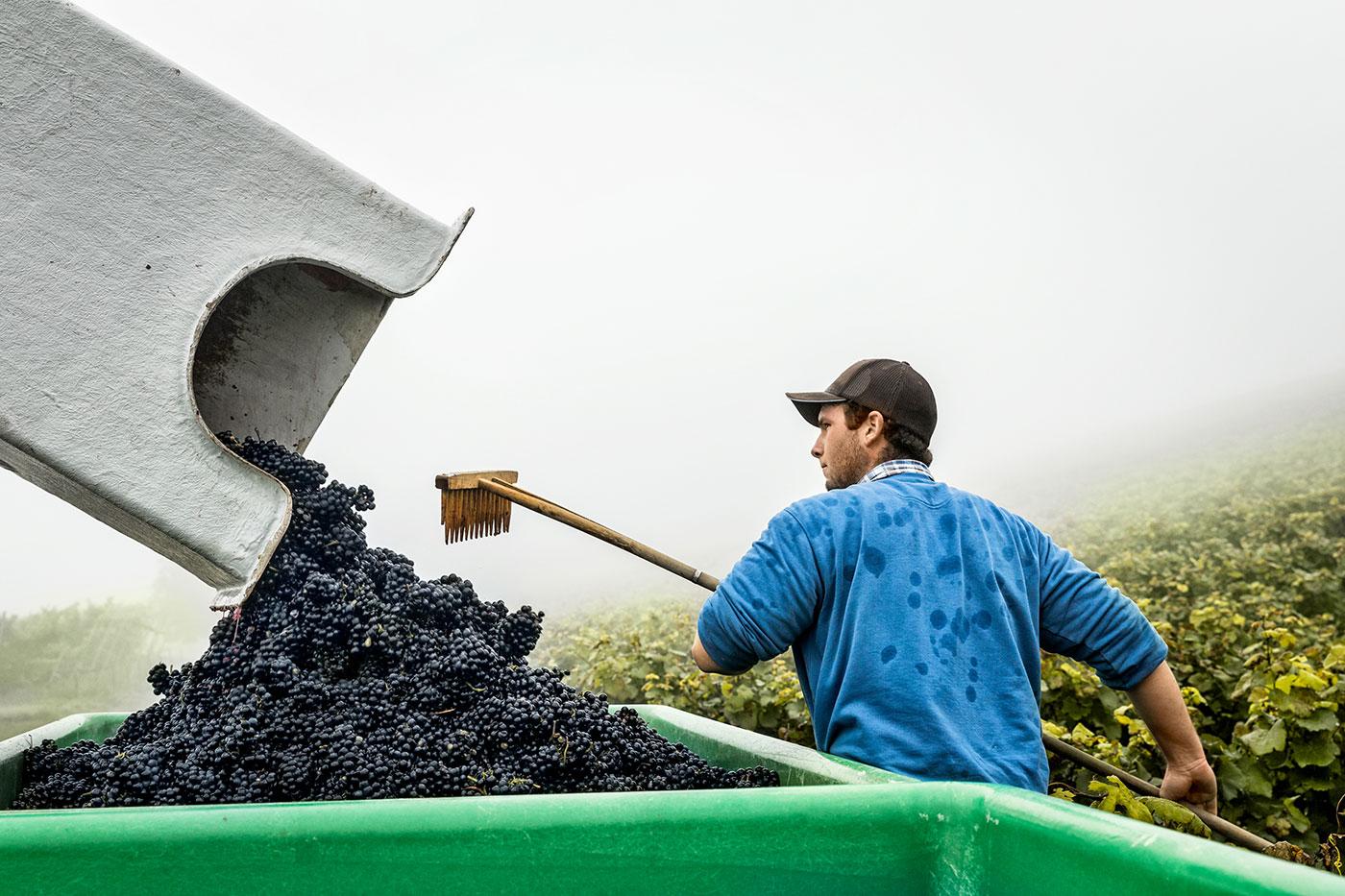 Die_Weinmacher_Franken_Das_Weinjahr_Herbst-Weinlese